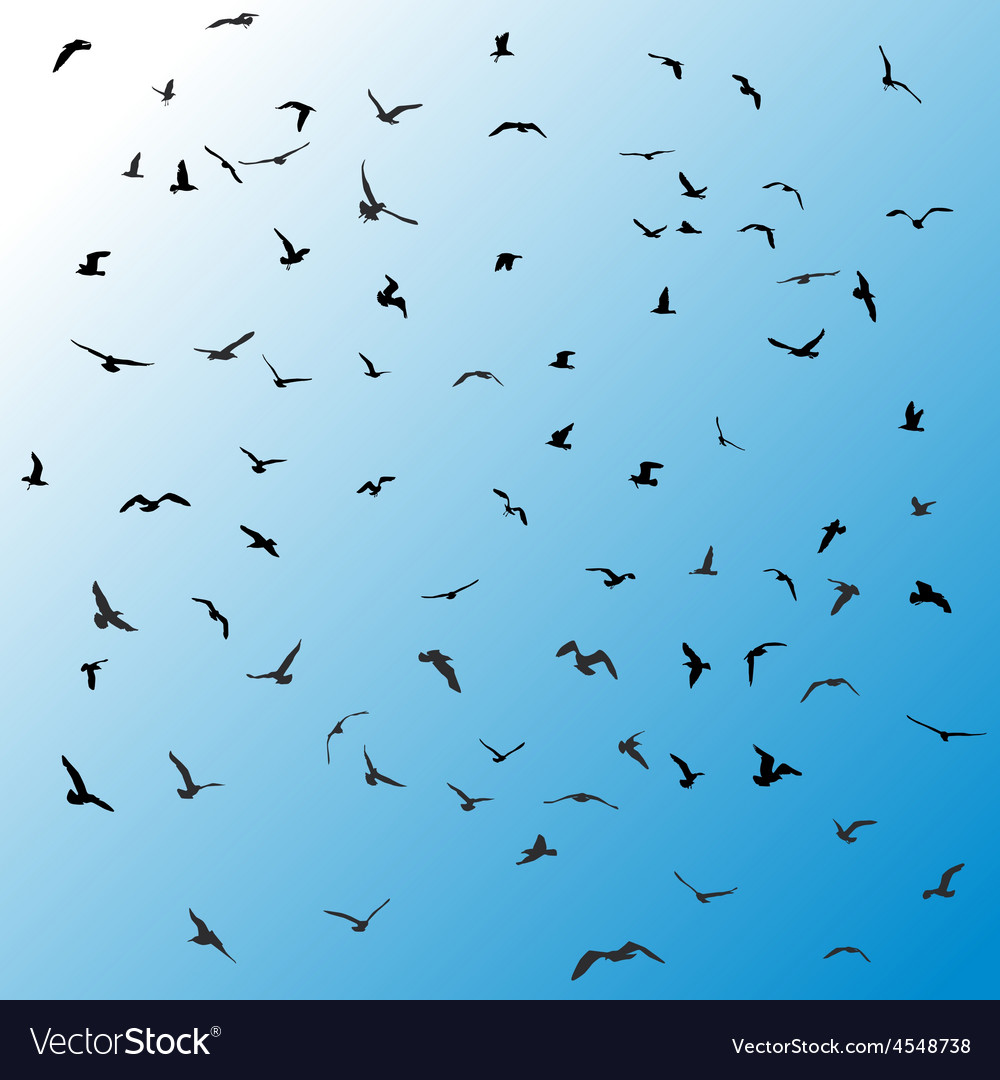 Birds gulls black silhouette on blue background vector | Price: 1 Credit (USD $1)