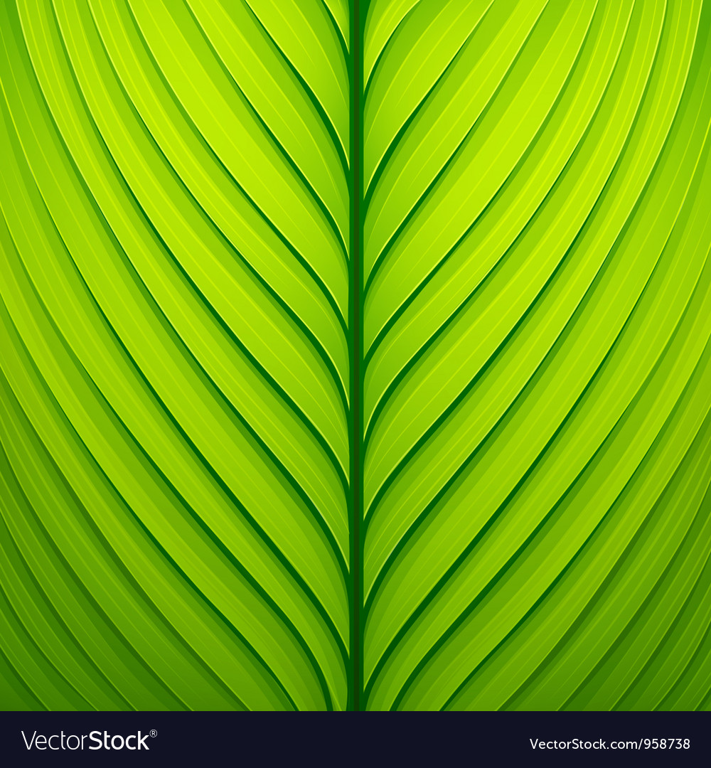 Texture of a green leaf vector | Price: 1 Credit (USD $1)