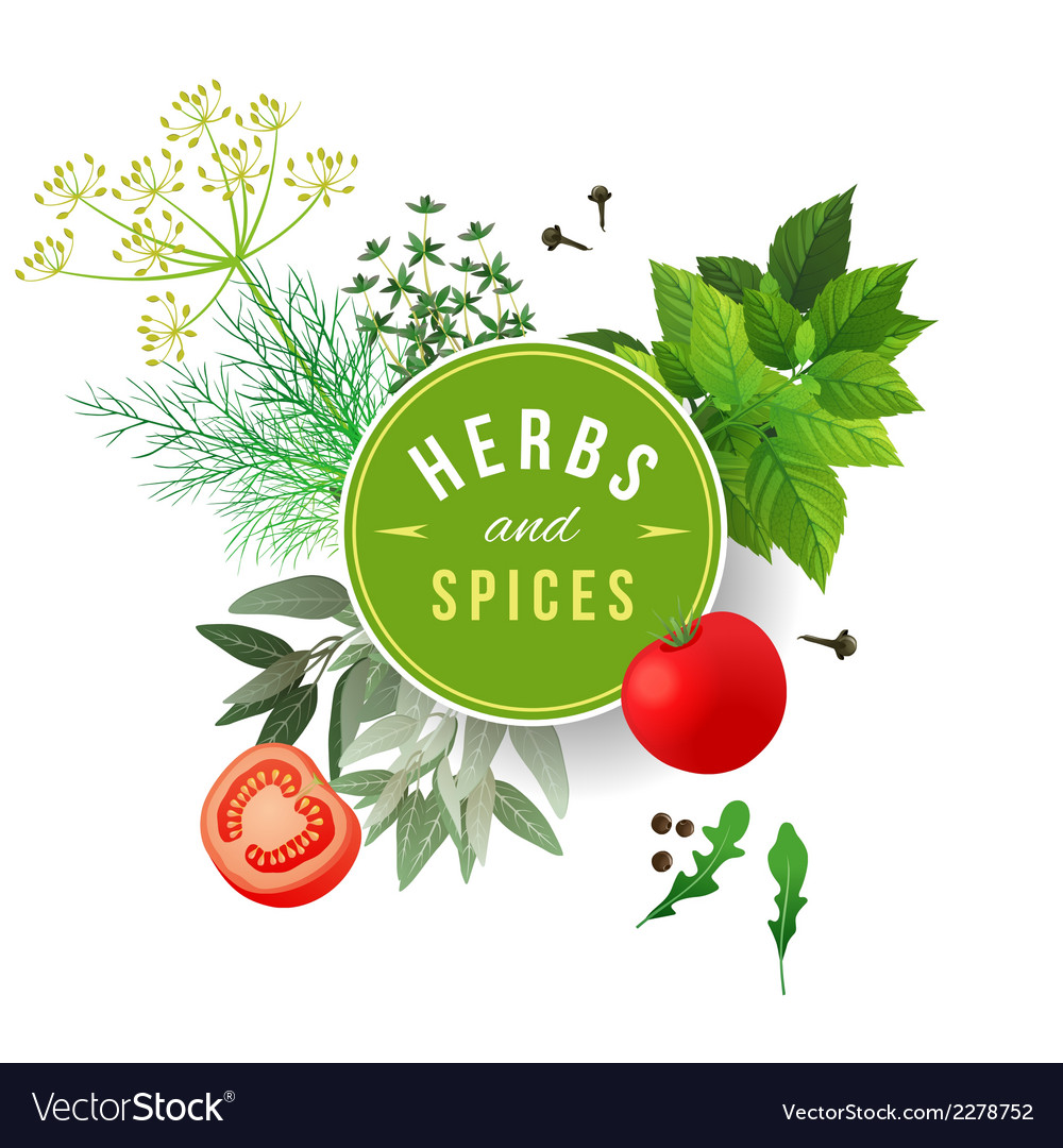 Herbs and spices vector | Price: 1 Credit (USD $1)