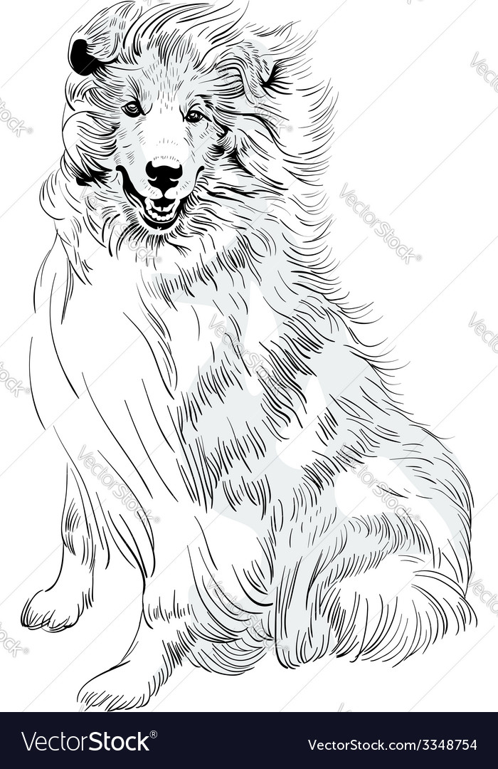 Sweet dog rough collie breed hand drawing vector | Price: 1 Credit (USD $1)
