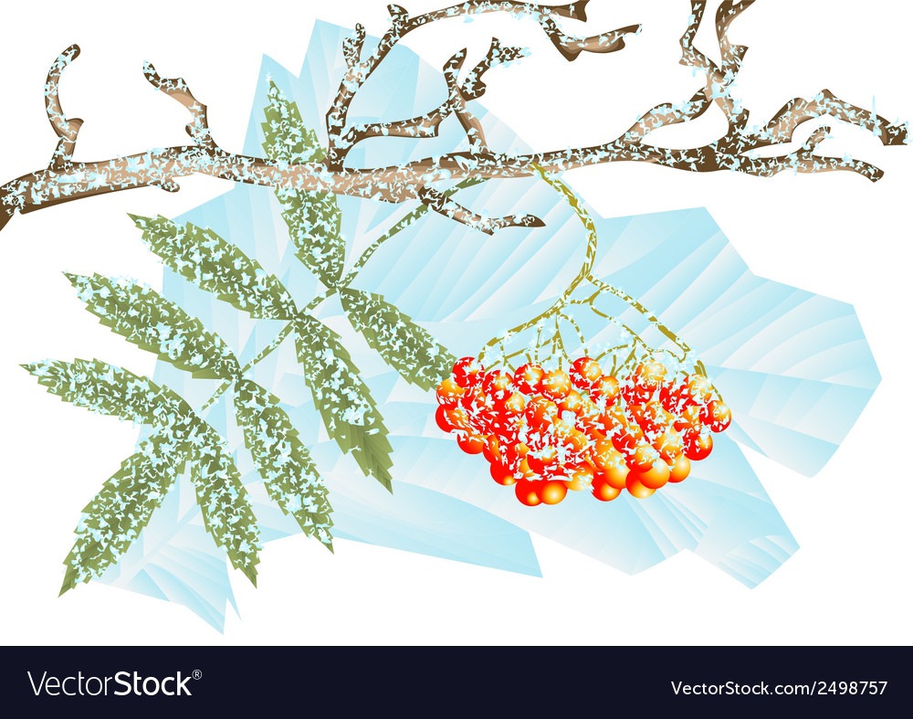 Winter frost vector | Price: 1 Credit (USD $1)