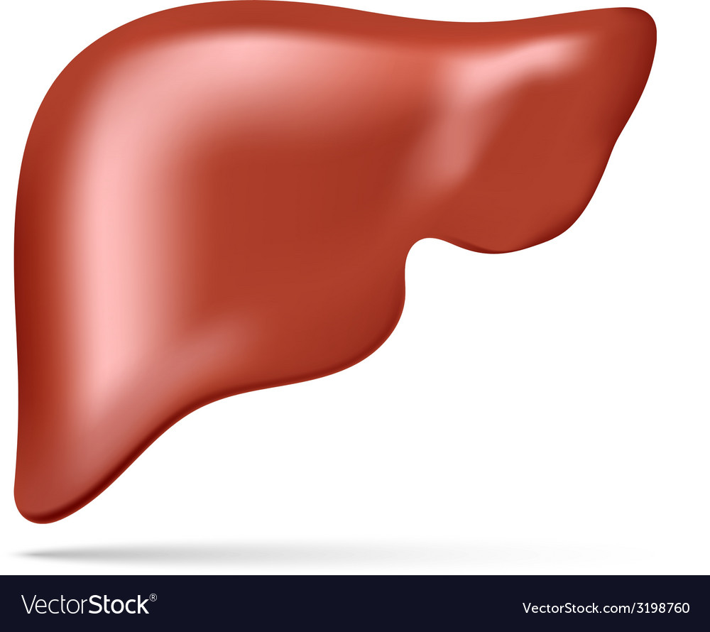 Human liver vector | Price: 1 Credit (USD $1)