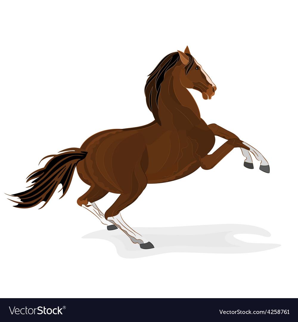 Brown horse wild stallion isolated illus vector | Price: 1 Credit (USD $1)