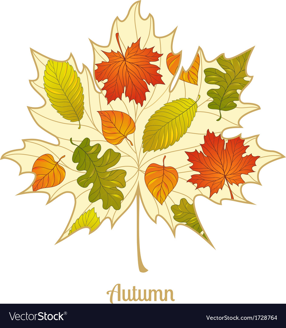 Autumnal maple leaf background vector | Price: 1 Credit (USD $1)