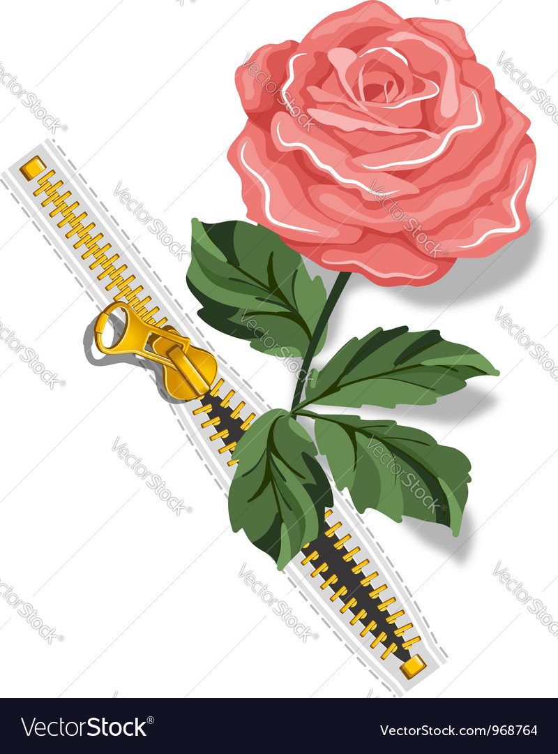 Zipper and rose vector | Price: 1 Credit (USD $1)