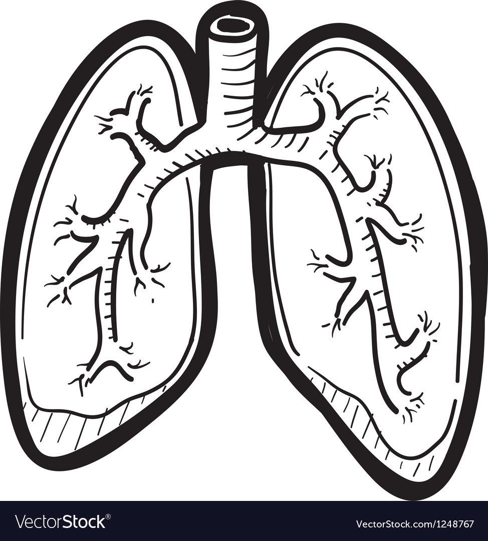 Human lungs doddle vector | Price: 1 Credit (USD $1)