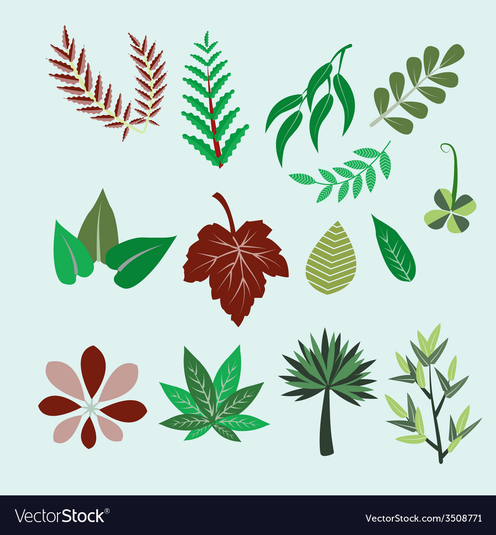 Collection of set different colorful leaves vector | Price: 1 Credit (USD $1)