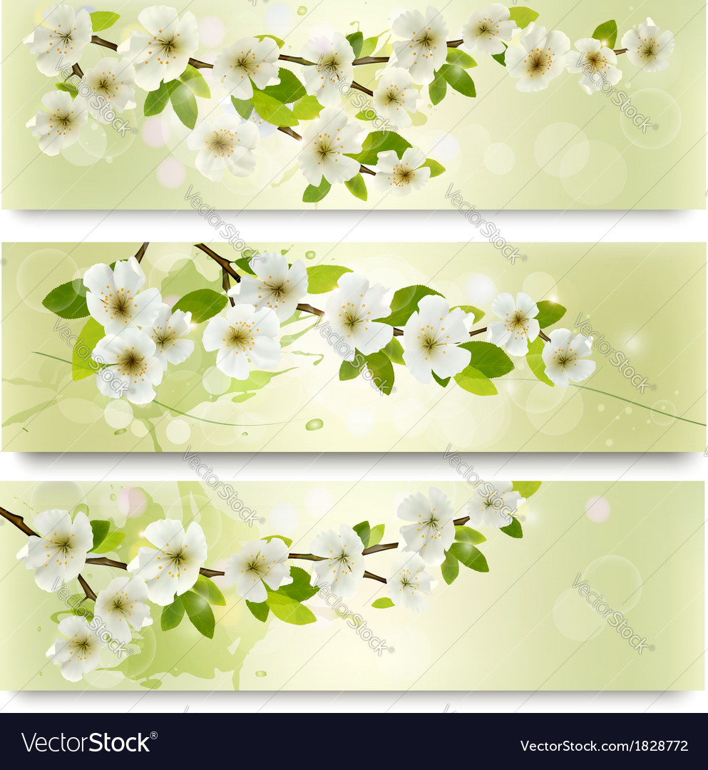 Three spring banners with blossoming tree brunch vector   Price: 1 Credit (USD $1)