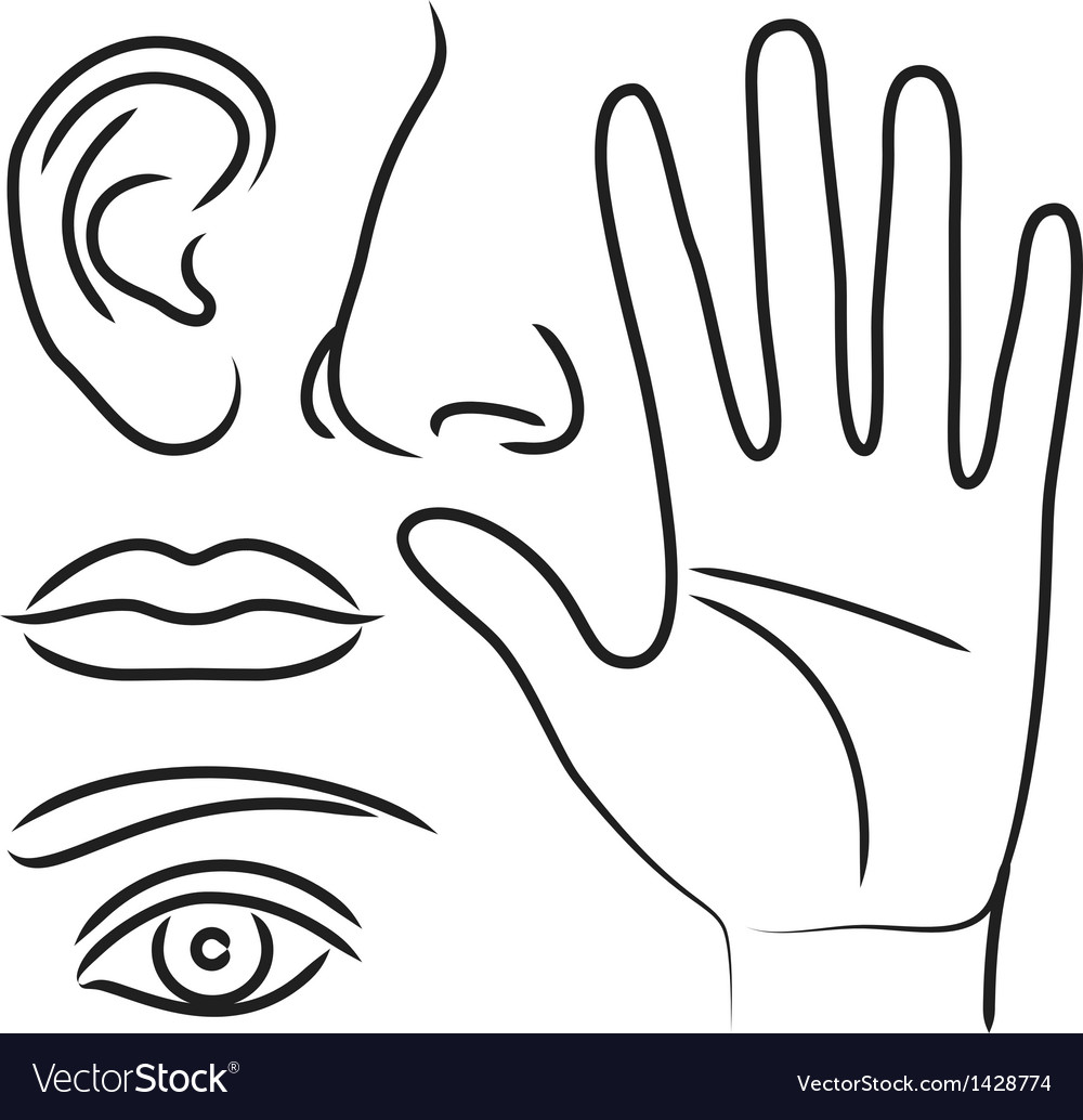Sensory organs hand nose ear mouth and eye vector | Price: 1 Credit (USD $1)