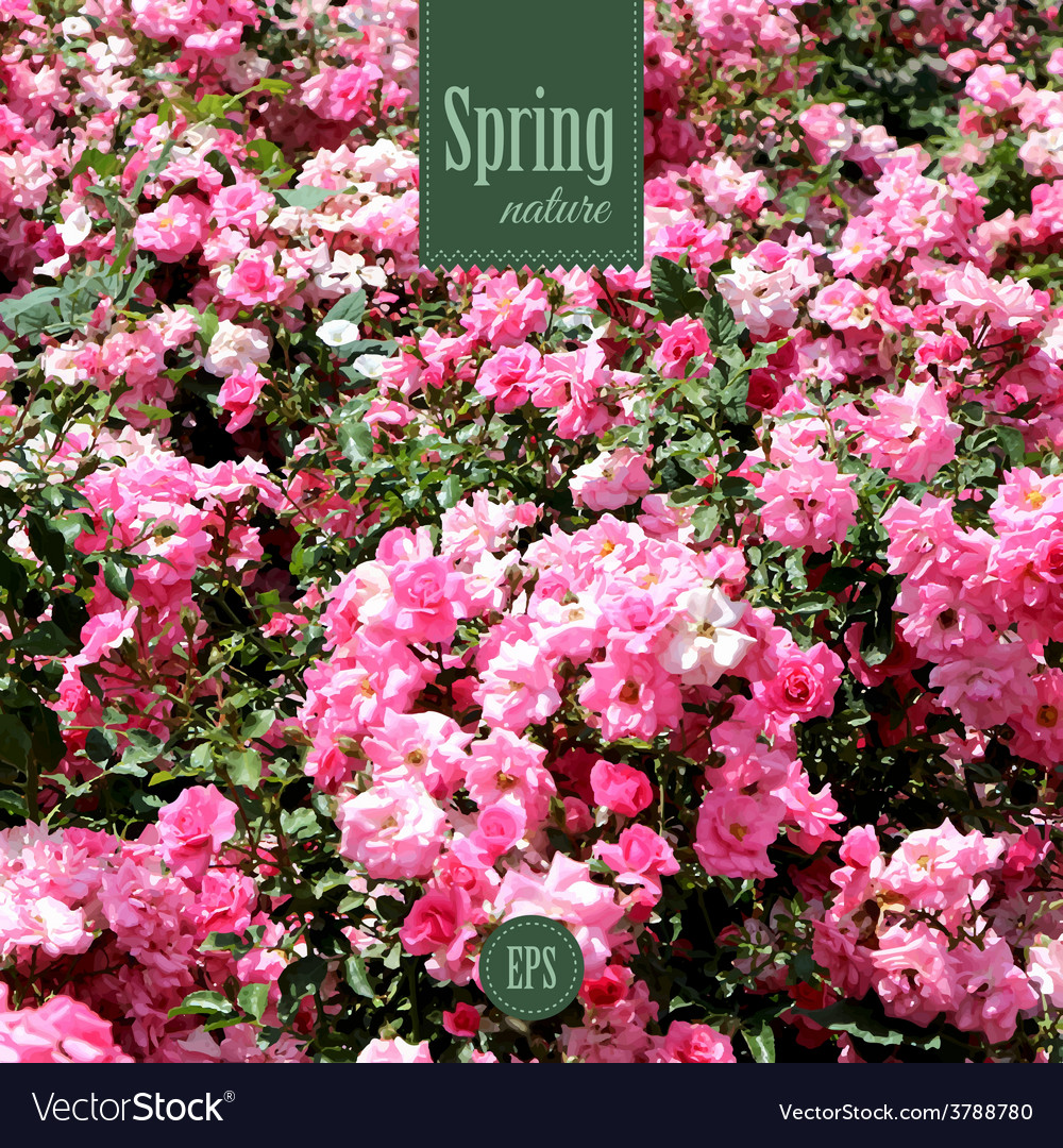 Spring nature background with pink roses vector | Price: 1 Credit (USD $1)