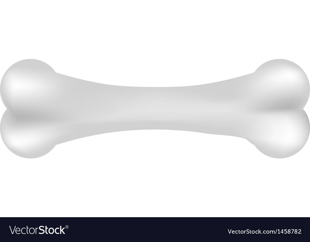 Bone vector | Price: 1 Credit (USD $1)