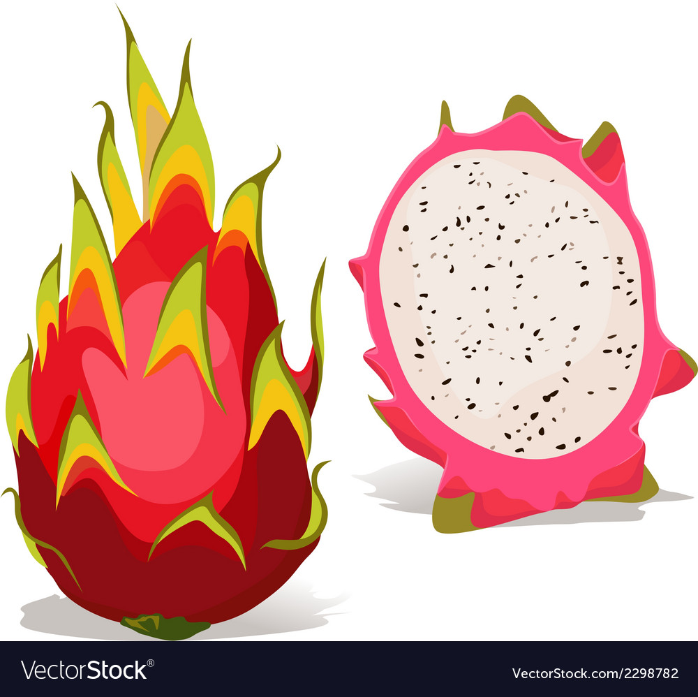 Dragon fruit - vector | Price: 1 Credit (USD $1)