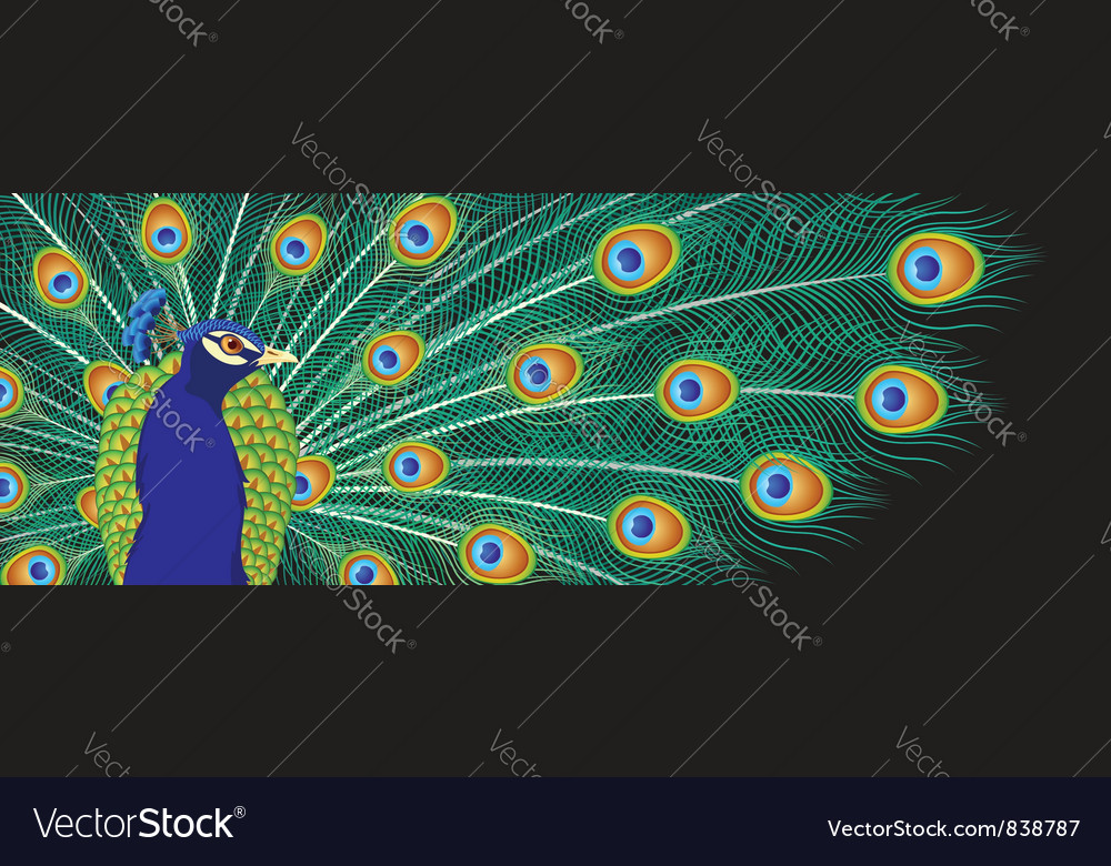Peacock background vector | Price: 1 Credit (USD $1)