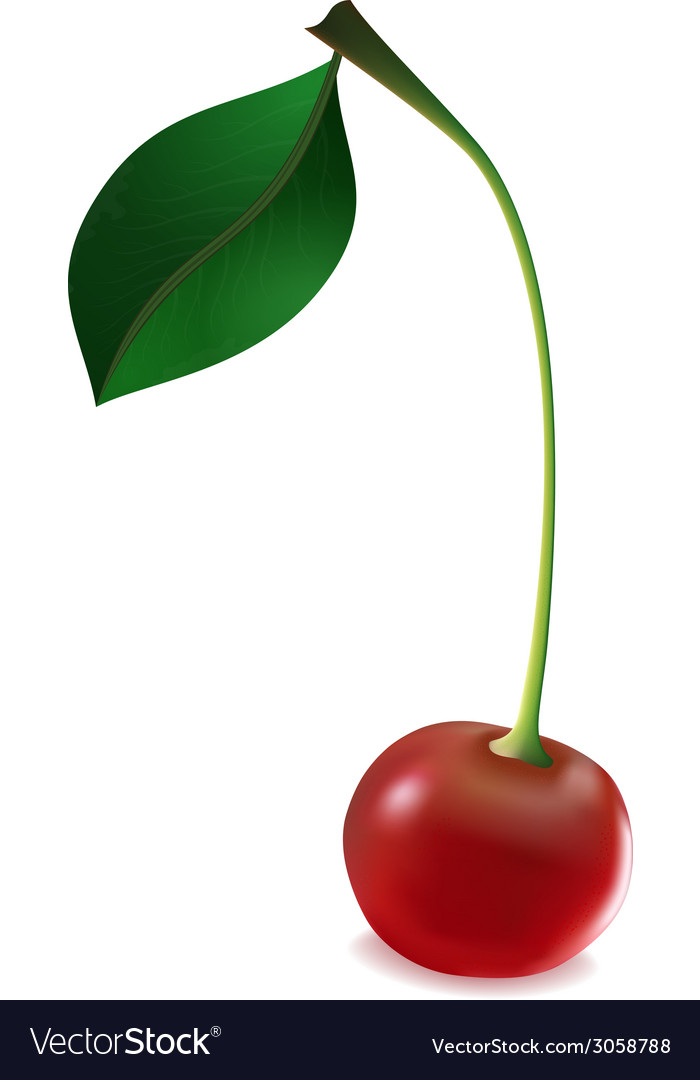Cherry with leaf vector | Price: 1 Credit (USD $1)