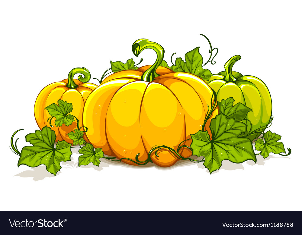 Pumpkins isolated on white vector | Price: 3 Credit (USD $3)
