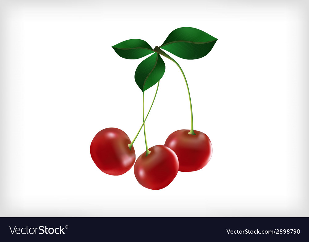 Cherries with leaves vector | Price: 1 Credit (USD $1)