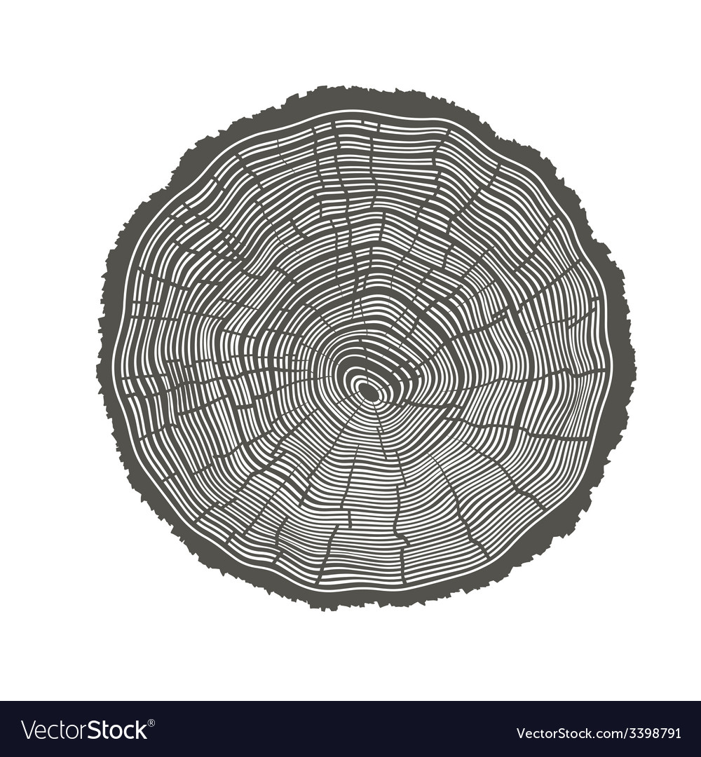Tree rings isolated vector | Price: 1 Credit (USD $1)