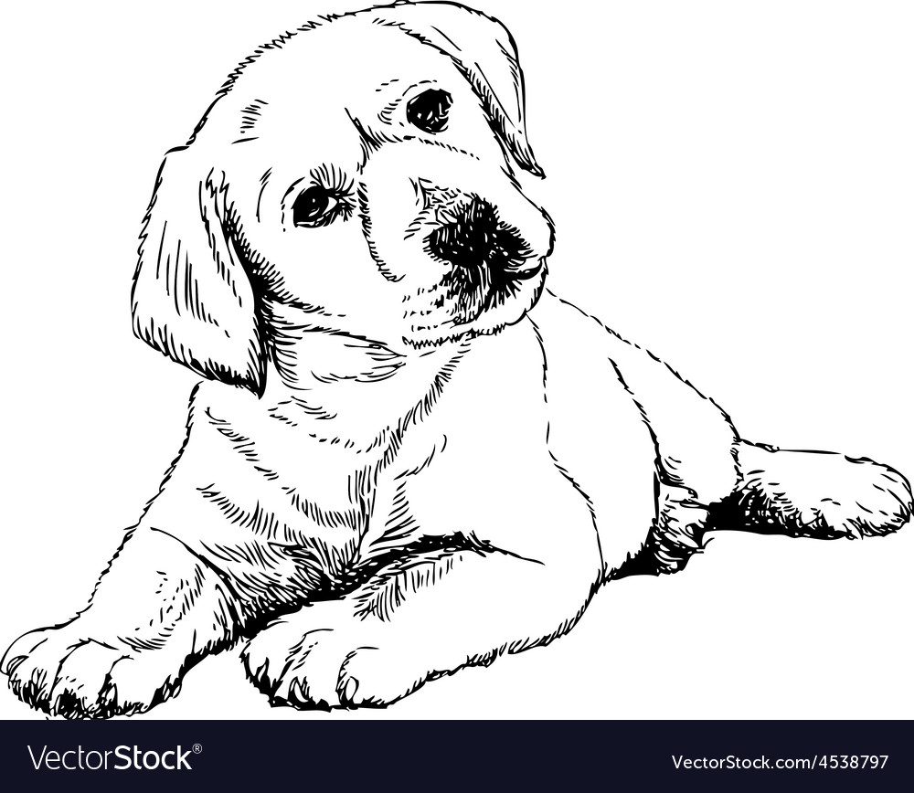 Labrador retriever puppy vector | Price: 3 Credit (USD $3)