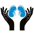 Hands with human kidneys symbol vector