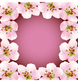 Frame with blossoming sakura japanese cherry tree vector