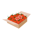 Fresh red tomatoes in a shipping box vector