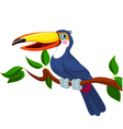 Of toucan sitting on tree branch vector