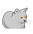 Cartoon grey cat isolated on the white vector