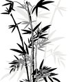 Bamboo leaves in black and white colors for design vector