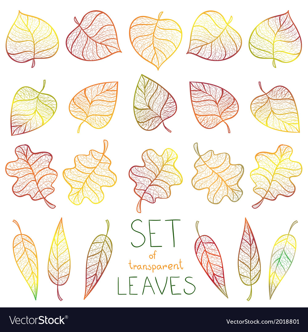 Collection colourful autumn leaves isolated vector | Price: 1 Credit (USD $1)