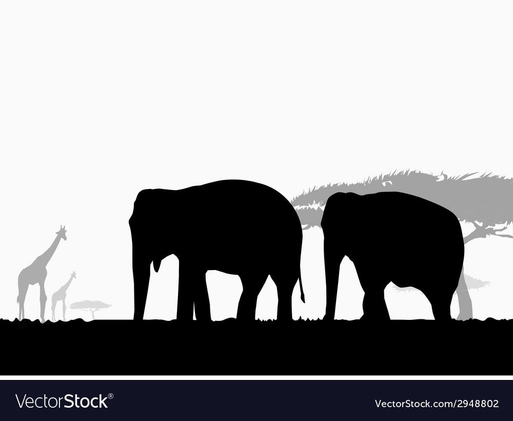 Elephants in africa safari vector | Price: 1 Credit (USD $1)