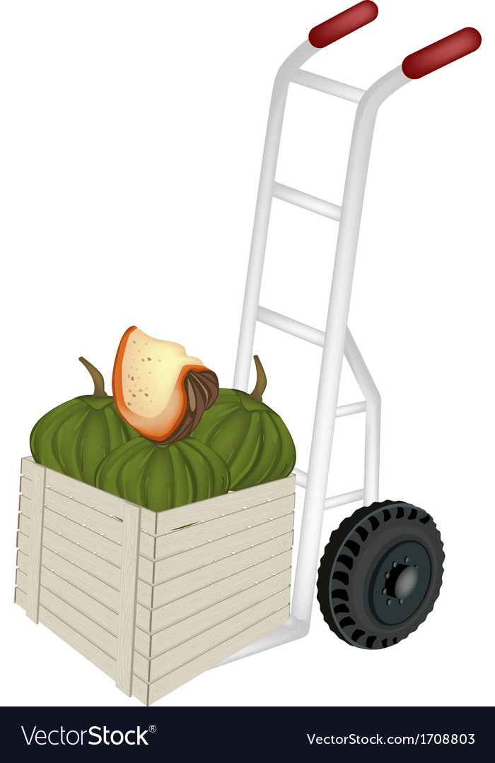 Hand truck loading green pumpkins in shipping box vector | Price: 1 Credit (USD $1)