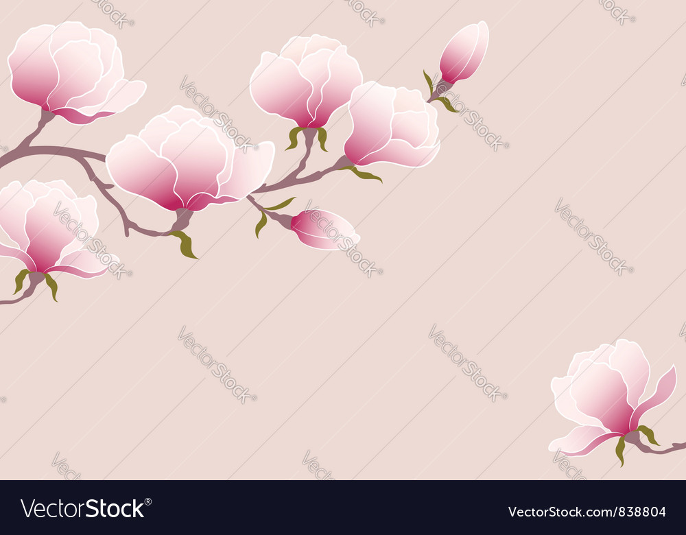 Tender magnolia vector | Price: 1 Credit (USD $1)