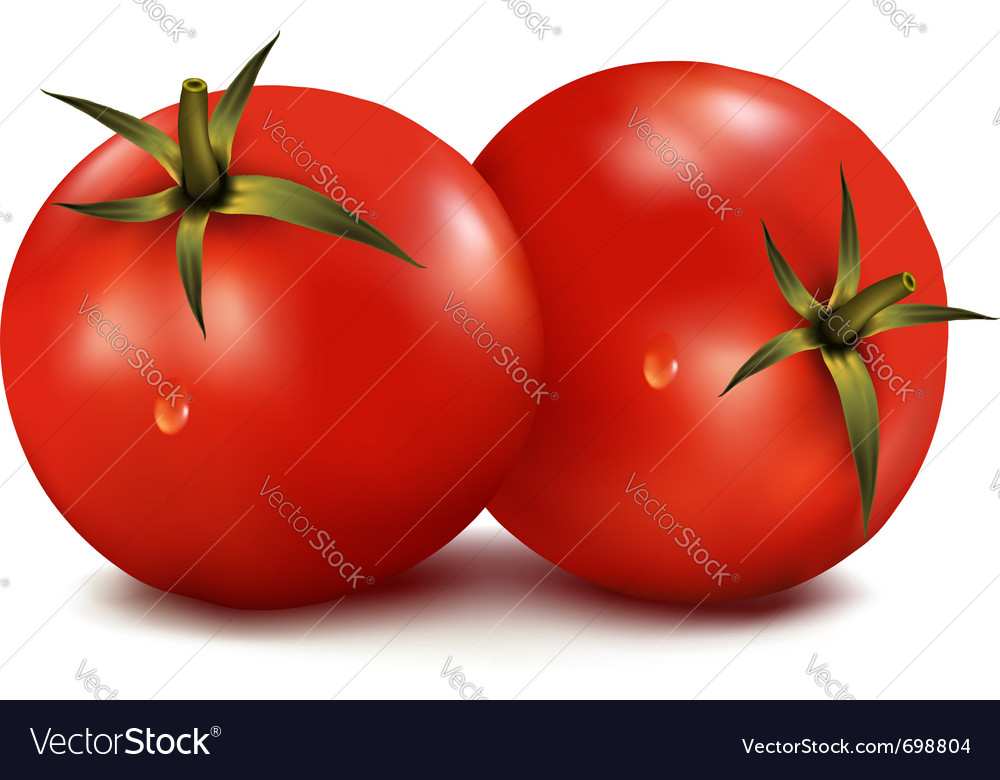 Tomatoes vector | Price: 1 Credit (USD $1)