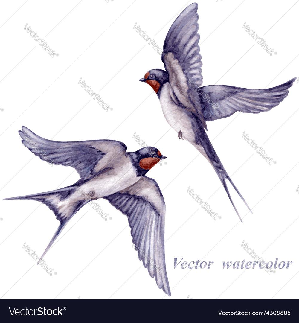 Swallows watercolor vector