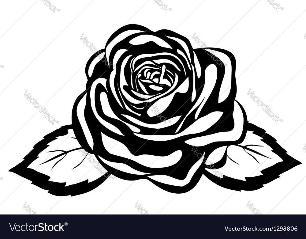 Abstract black and white rose vector | Price: 1 Credit (USD $1)
