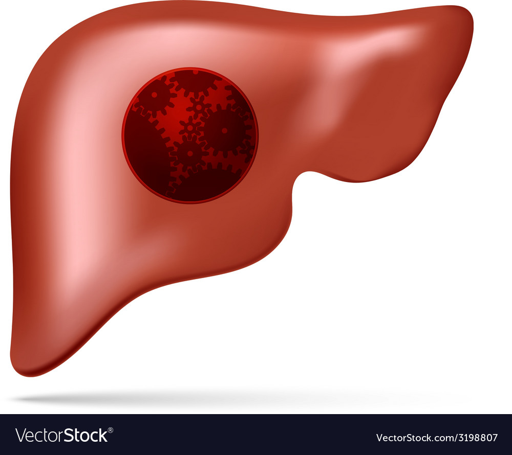 Human liver with gear and cogwheel vector | Price: 1 Credit (USD $1)