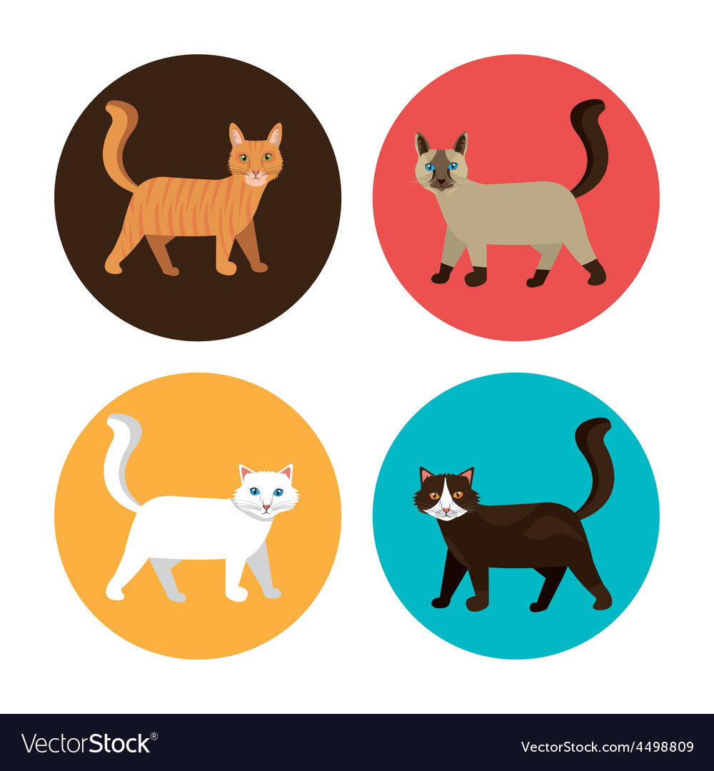 Cat design vector | Price: 1 Credit (USD $1)