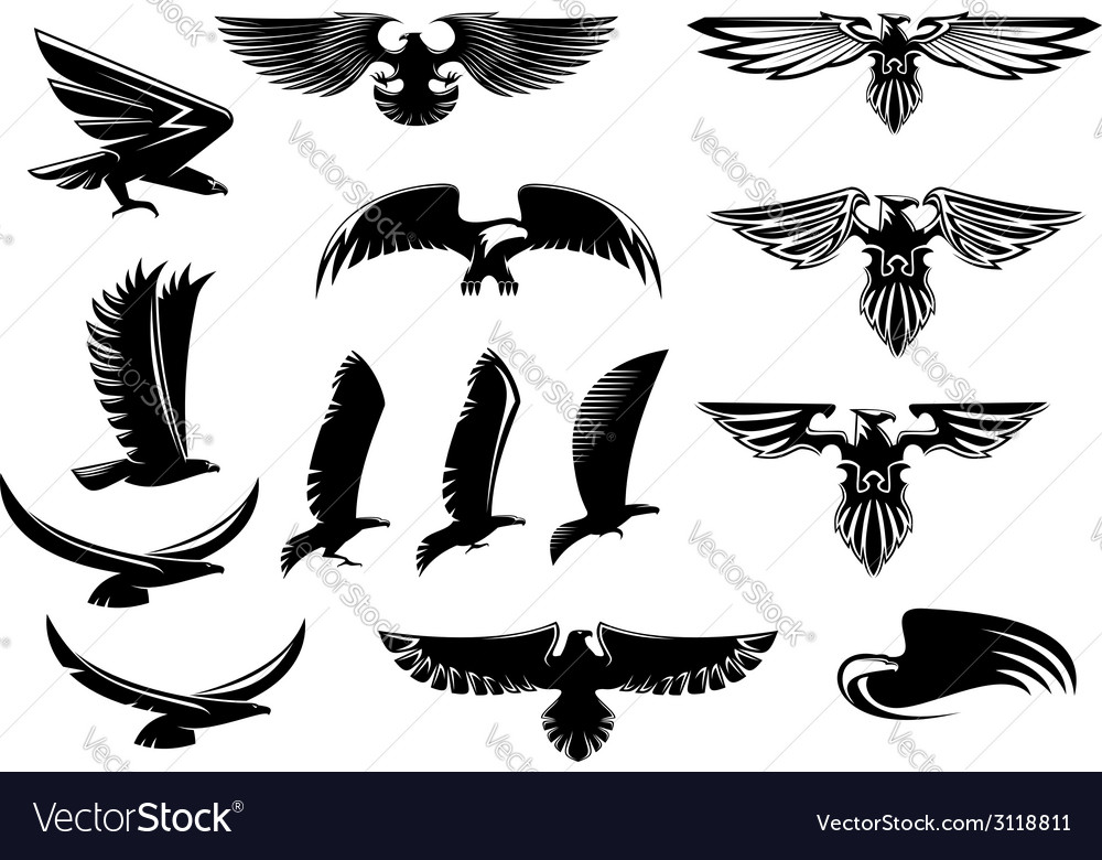Eagle falcon and hawk birds set vector | Price: 1 Credit (USD $1)