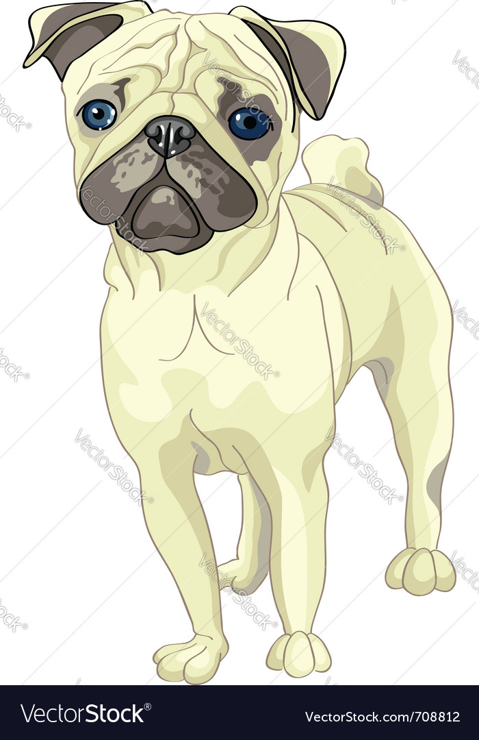Pug breed vector | Price: 3 Credit (USD $3)