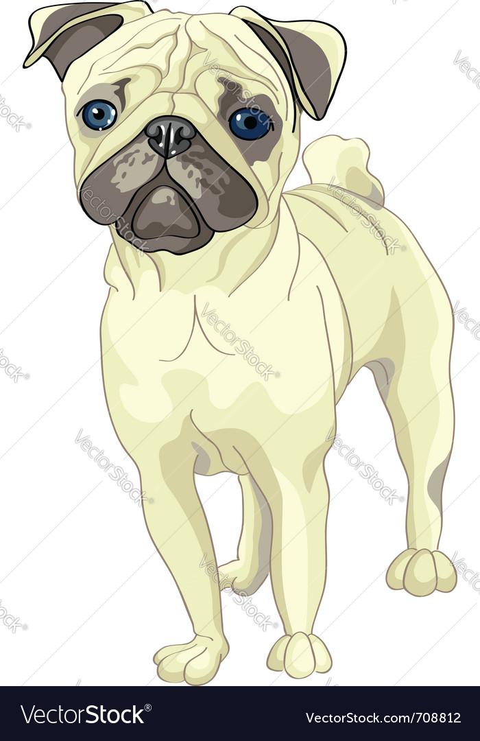 Pug breed vector | Price: 3 Credit (USD $3)