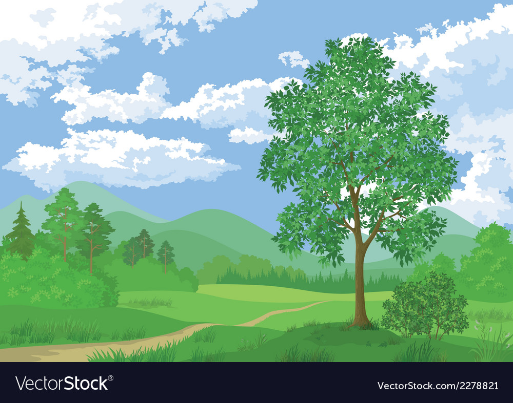 Landscape summer forest and maple tree vector | Price: 1 Credit (USD $1)