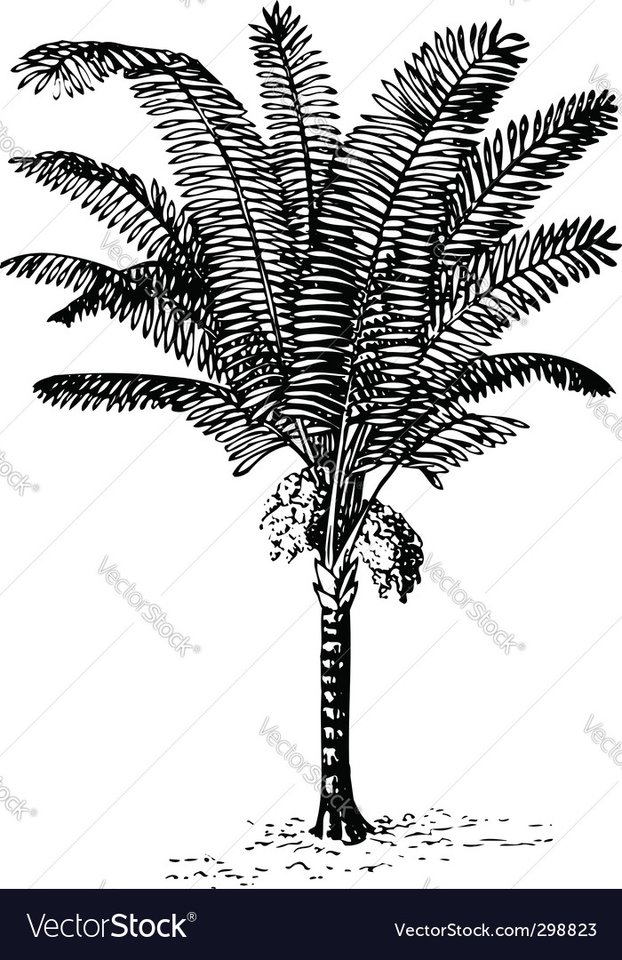 Plant arenga pinnata vector | Price: 1 Credit (USD $1)