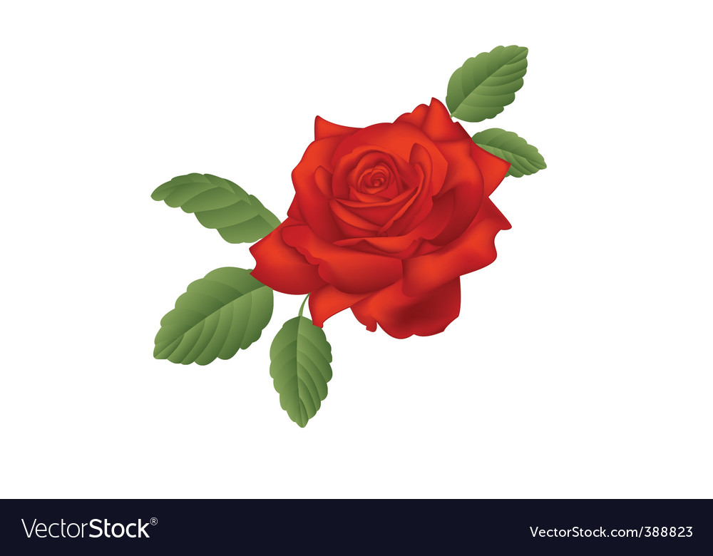 Scarlet rose vector | Price: 1 Credit (USD $1)