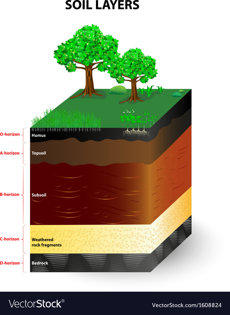 Soil layers vector | Price: 1 Credit (USD $1)