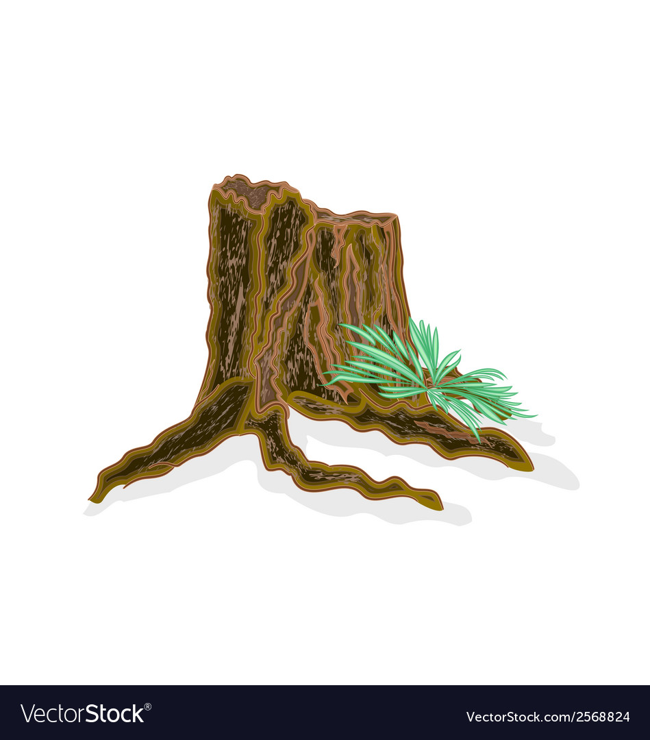 Stump with ferns vector | Price: 1 Credit (USD $1)