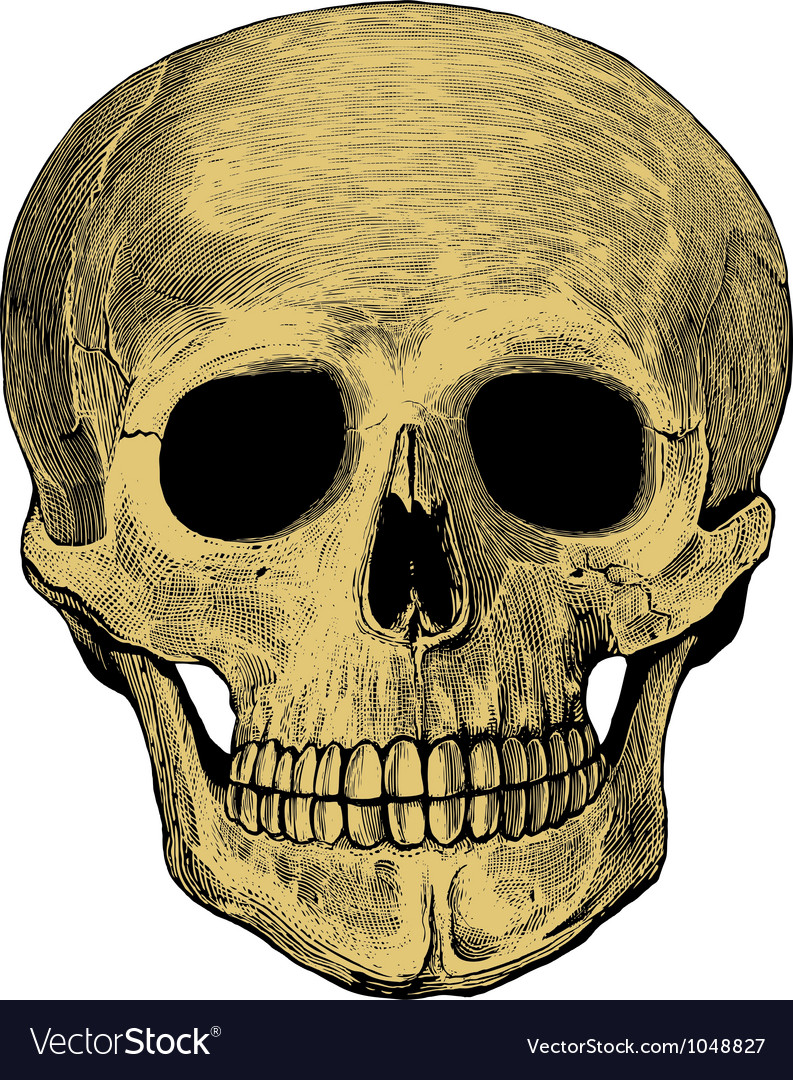 Human skull in engraved style vector | Price: 1 Credit (USD $1)
