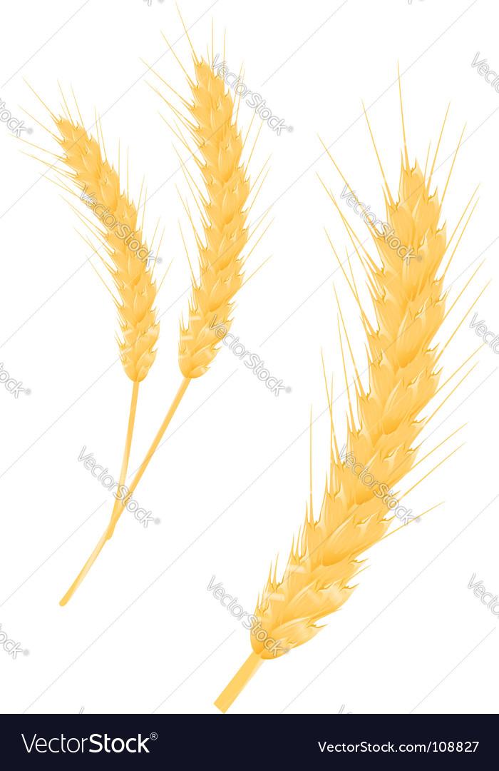 Wheat ear vector   Price: 1 Credit (USD $1)