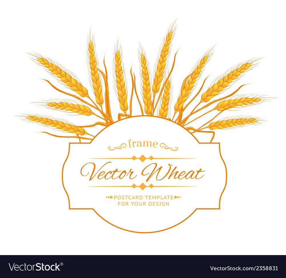 Wheat ear card vector | Price: 1 Credit (USD $1)