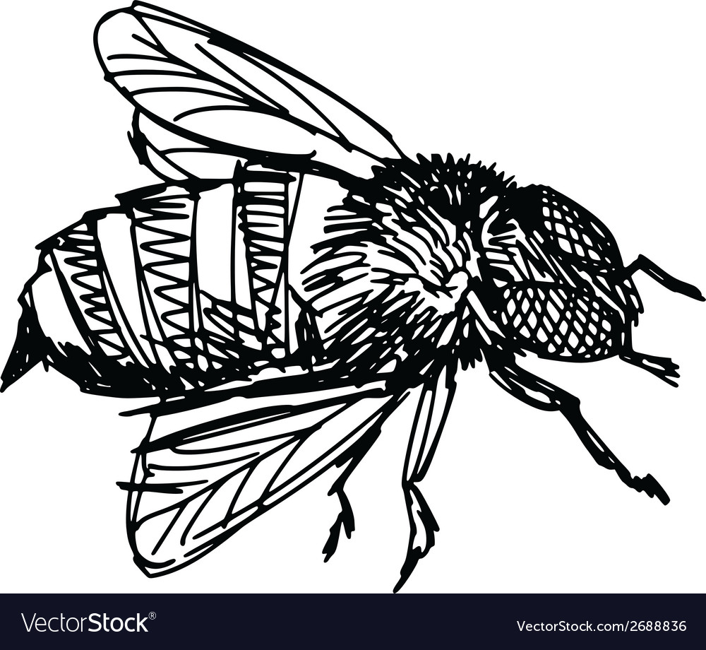 Working bee vector | Price: 1 Credit (USD $1)
