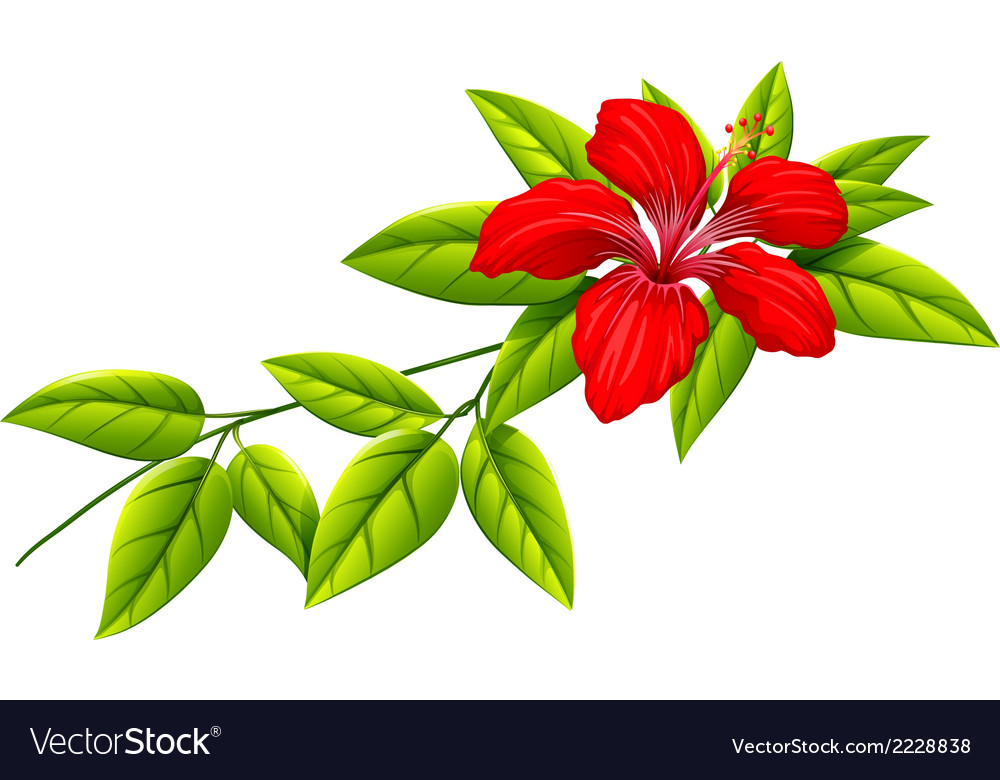 A plant with a red flower vector | Price: 1 Credit (USD $1)